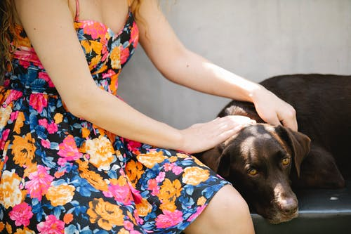 Crop anonymous female in sundress with floral ornament stroking bird dog with smooth coat in sunlight