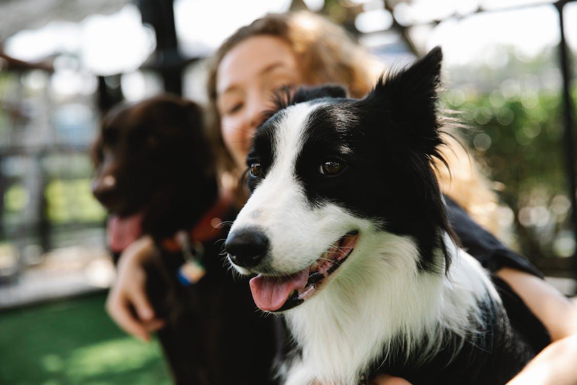 動物, 友誼, 可愛 的 免費圖庫相片