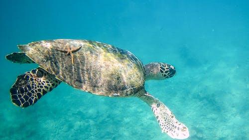 Immagine gratuita di animale acquatico, animale marino, avvicinamento