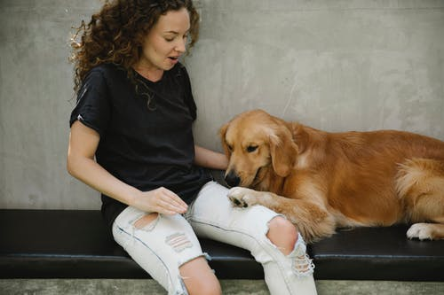 Shocked adult lady in casual outfit near Golden Retriever dog on bench with paw on leg near stone fence in daylight