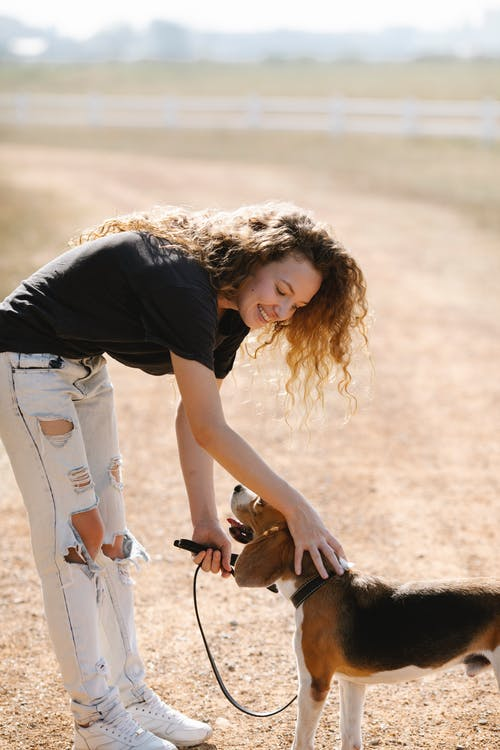 Glad young female with curly hair bending forward and stroking obedient Beagle dog on leash while standing on countryside road on sunny summer day
