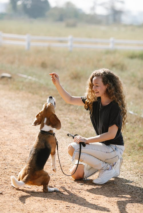 Happy young woman kneeling on countryside road and teaching Beagle dog to beg on sunny summer day