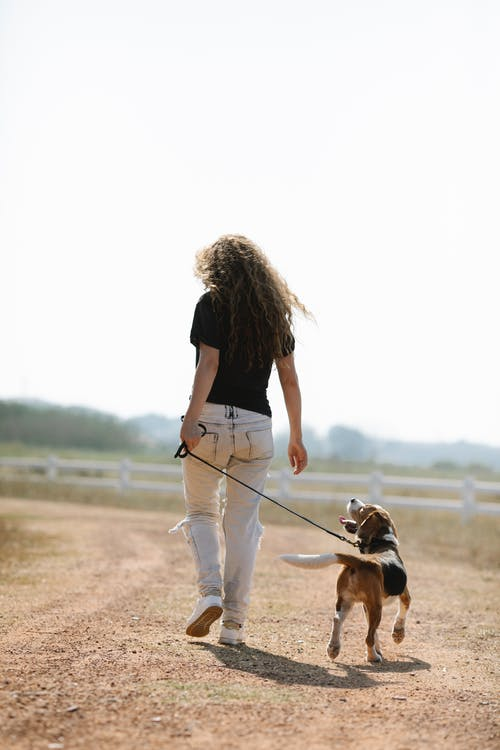 Unrecognizable female owner walking with dog in countryside
