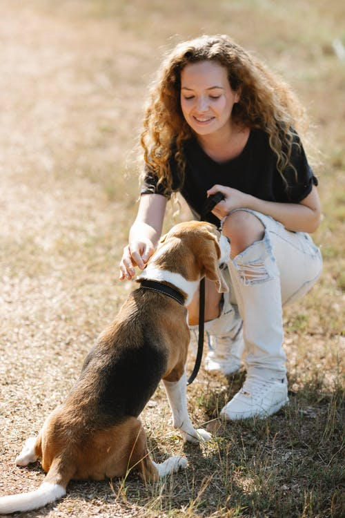 Young woman stroking dog on sunny day in nature