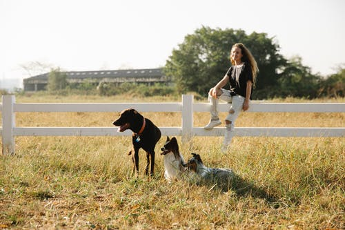 Cheerful adult woman resting on fence against purebred dogs with tongues out on lawn in sunlight
