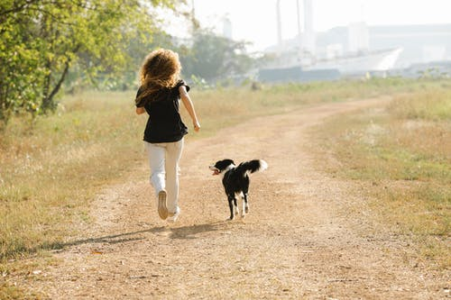 Unrecognizable sportswoman running with Border Collie on path in park