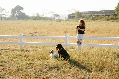 Full body content female in casual clothes taking pictures of obedient cute Border Collie and Labrador Retriever dogs sitting in farmland enclosure