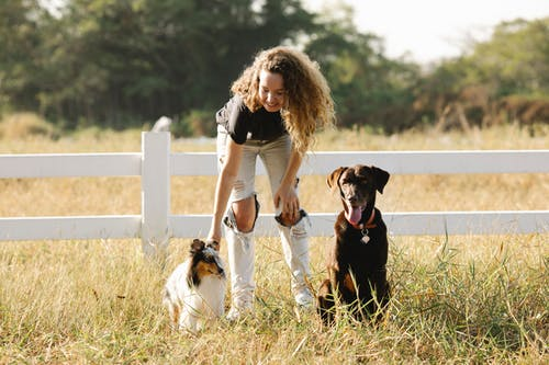 Smiling woman stroking adorable dogs in countryside enclosure