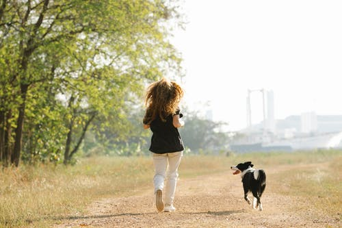 Full body unrecognizable female in casual clothes running with adorable black Border Collie dog along footpath in sunny summer countryside