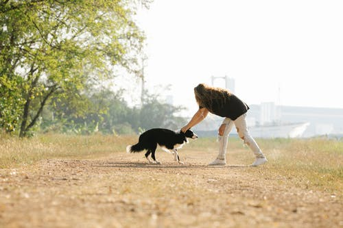 Faceless woman stroking fluffy black Collie in nature