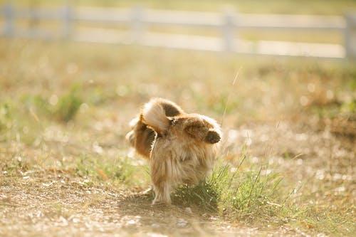 Fluffy dog raising hind paw in enclosure