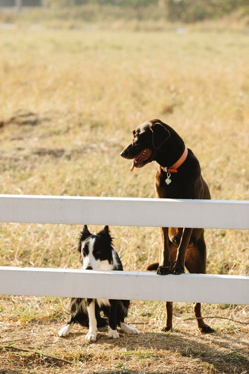 Gratis stockfoto met beesten, border collie, buiten