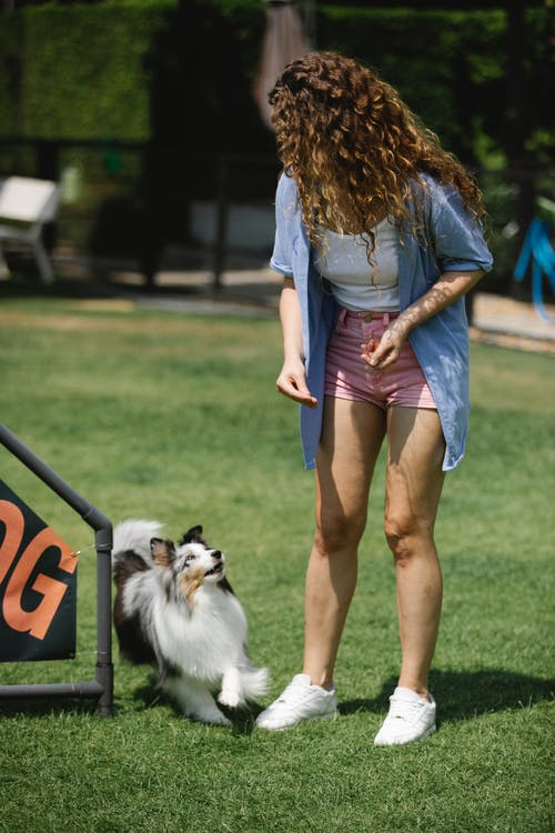 Unrecognizable owner taming Collie on lawn