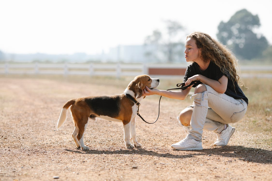 Side view of woman caressing cute purebred dog while looking at each other on dry path in sunlight