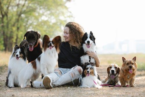 Gratis stockfoto met beagle, beagle hond, beest
