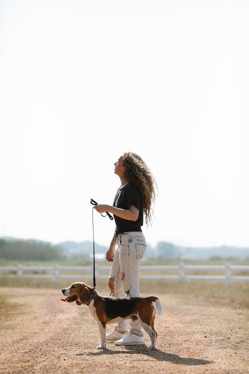 Gratis stockfoto met aarde, babyhondje, beagle