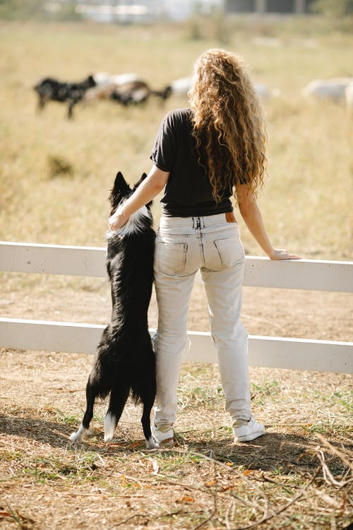 Woman embracing purebred dog leaning on wooden enclosure