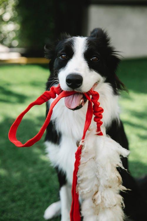 Fotos de stock gratuitas de adorable, animal, atento