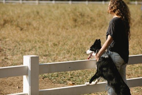 Foto stok gratis anjing, berdarah murni, berkembang biak