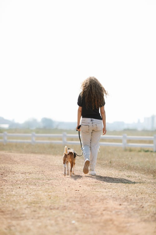 Anonymous woman walking with dog in countryside