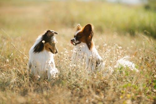 Foto stok gratis alam, anjing, anjing gembala