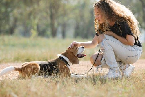 Gratis stockfoto met aanbiddelijk, aardig, beagle