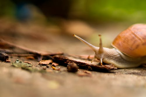 Close-Up Photo of a Brown Snail on the Ground