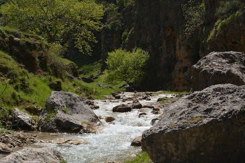 Imagine de stoc gratuită din amintiri, arbori, aventură, cascade