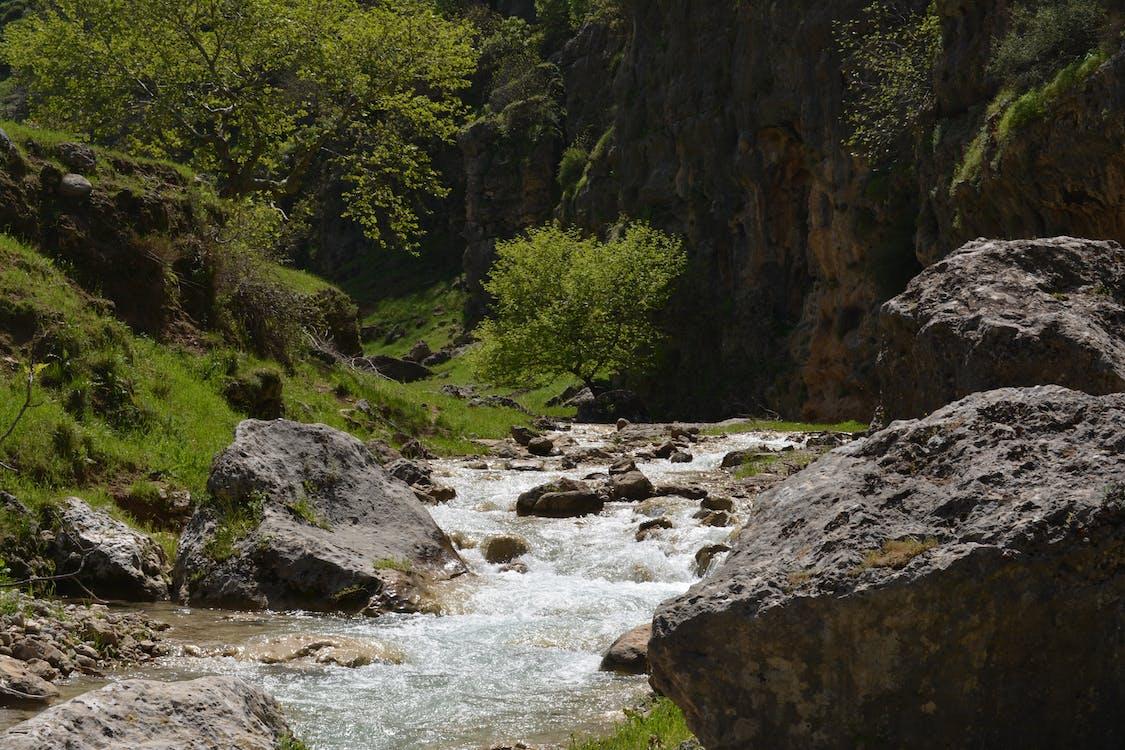 Free stock photo of adventure, beauty, dark green