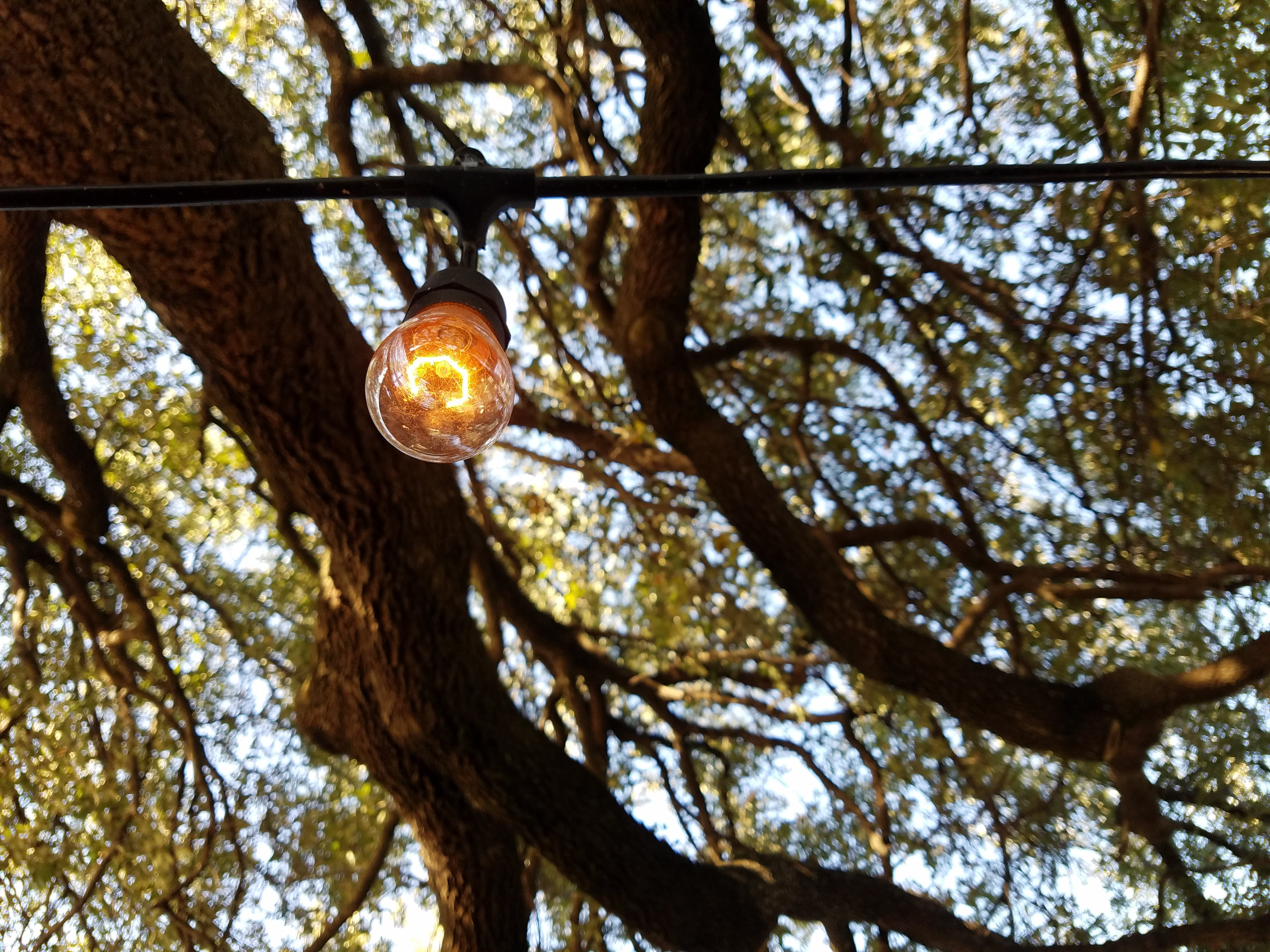 Free stock photo of branch, bulb, leaves, light