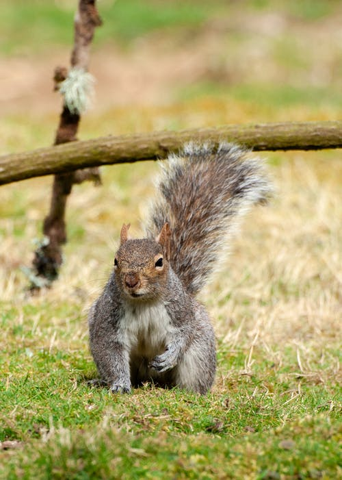 Close-Up Shot of a Squirrel Sitting on a Field