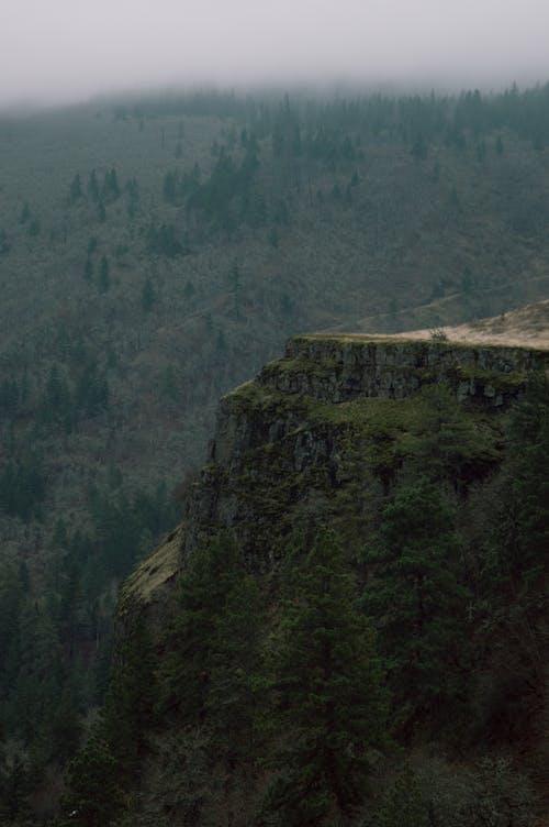 Immagine gratuita di ambiente, esterno, foresta