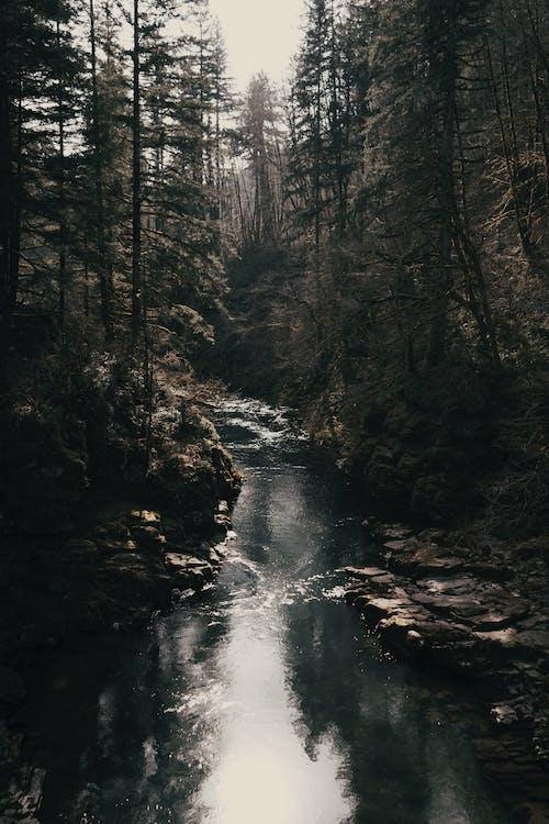 Immagine gratuita di acqua, acqua di fiume, alba