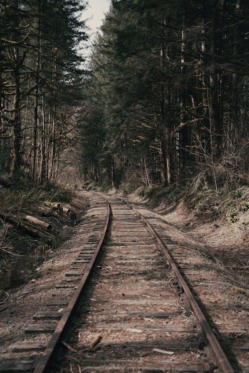 Immagine gratuita di alberi forestali, albero, allenare