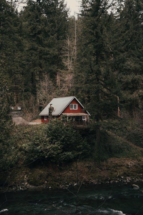 Immagine gratuita di alberi, cabina, cabina di legno