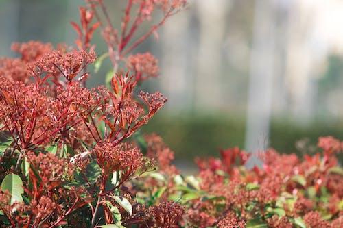 Fotos de stock gratuitas de arbusto, arbustos, flor