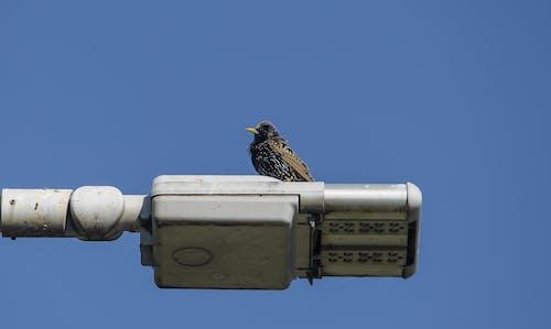 Fotos de stock gratuitas de Ave salvaje, ojo de pájaro, pájaro