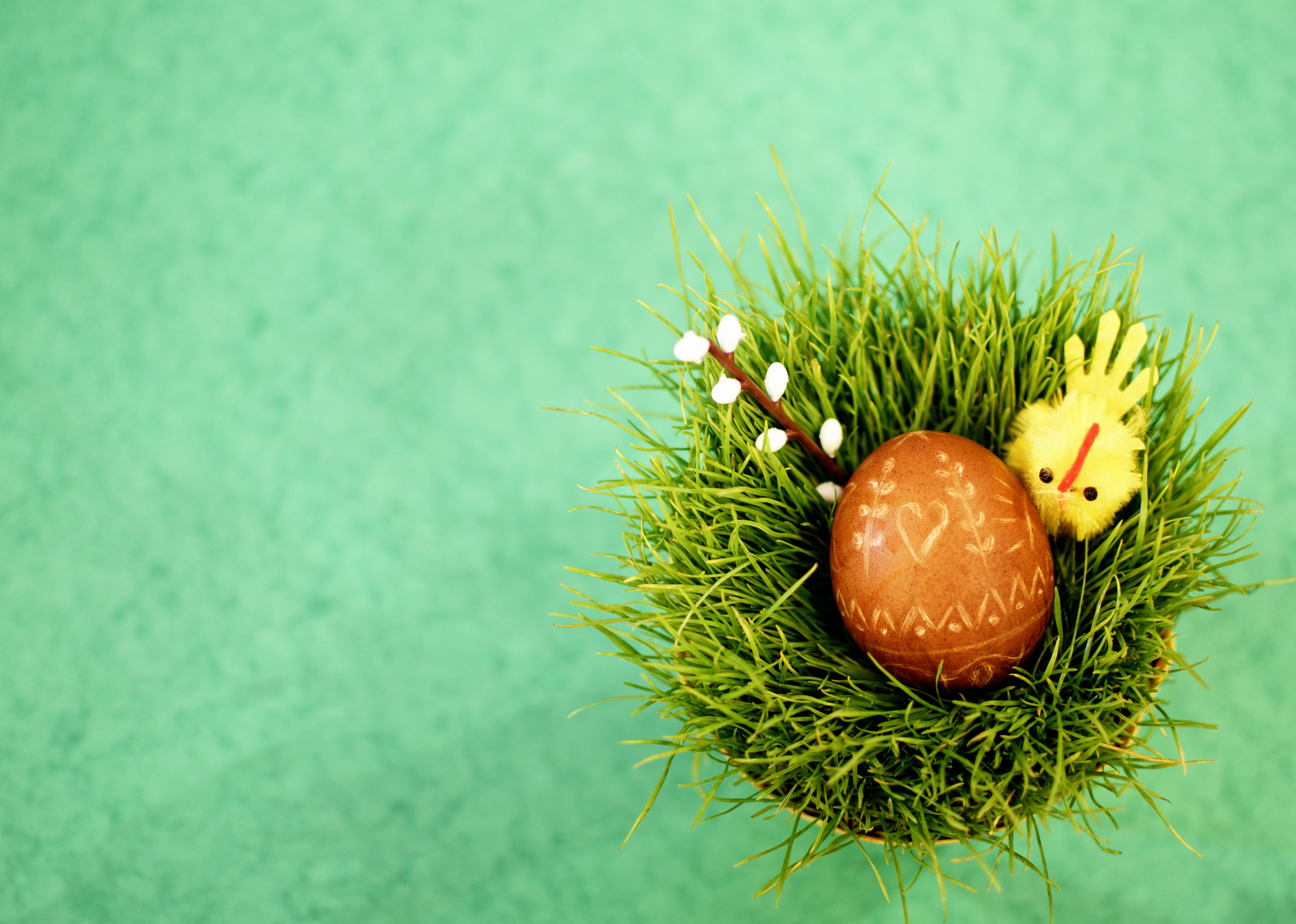 Free stock photo of food, night, grass, easter