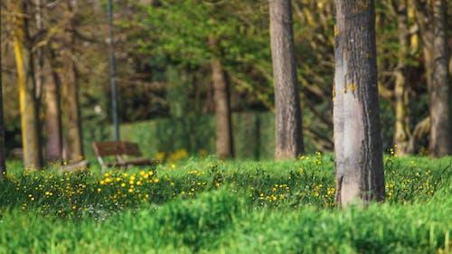 Fotos de stock gratuitas de arboles, arbusto, banco