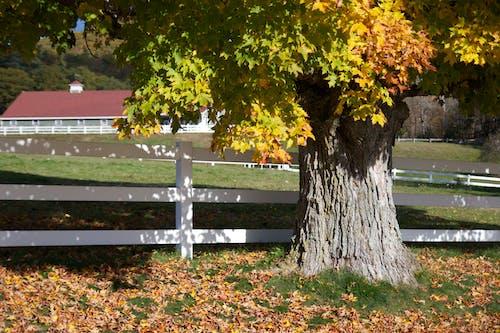Ảnh lưu trữ miễn phí về chuồng, cỏ, hàng rào, tán lá