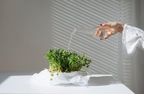 Person Holding Green Leaf Vegetable