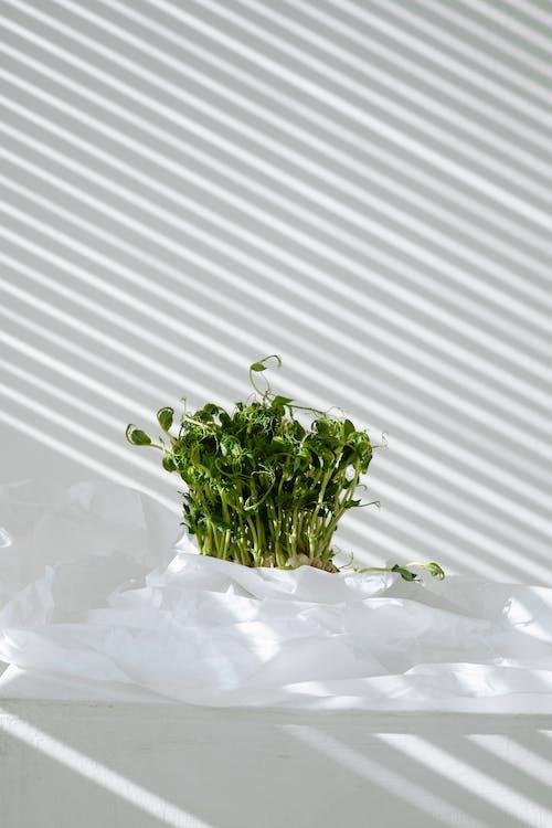 Green Plant on White Snow