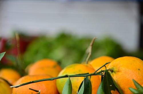 Free stock photo of laranja