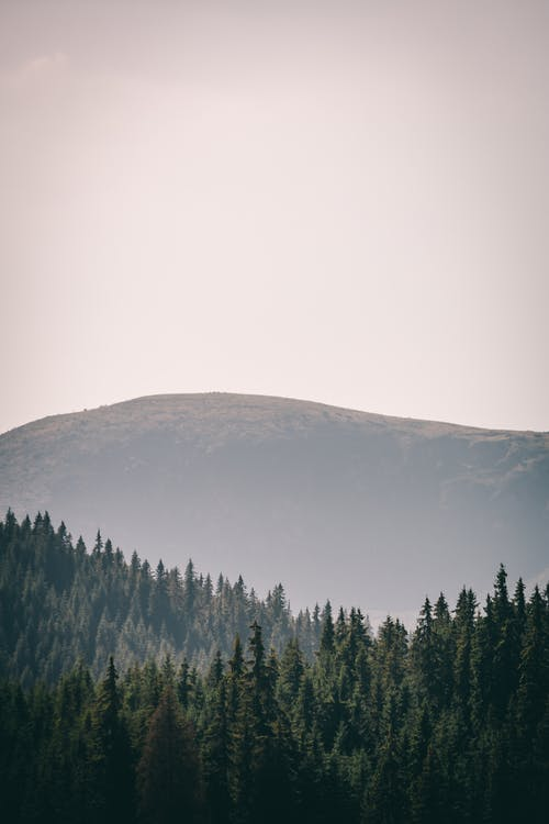 Coniferous woods and hill in haze