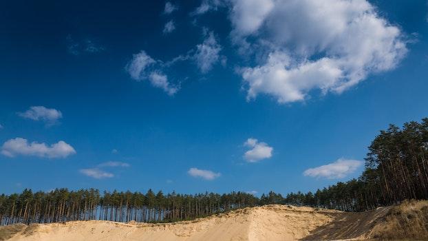 Free stock photo of forest, dune, woods, stobrawskie