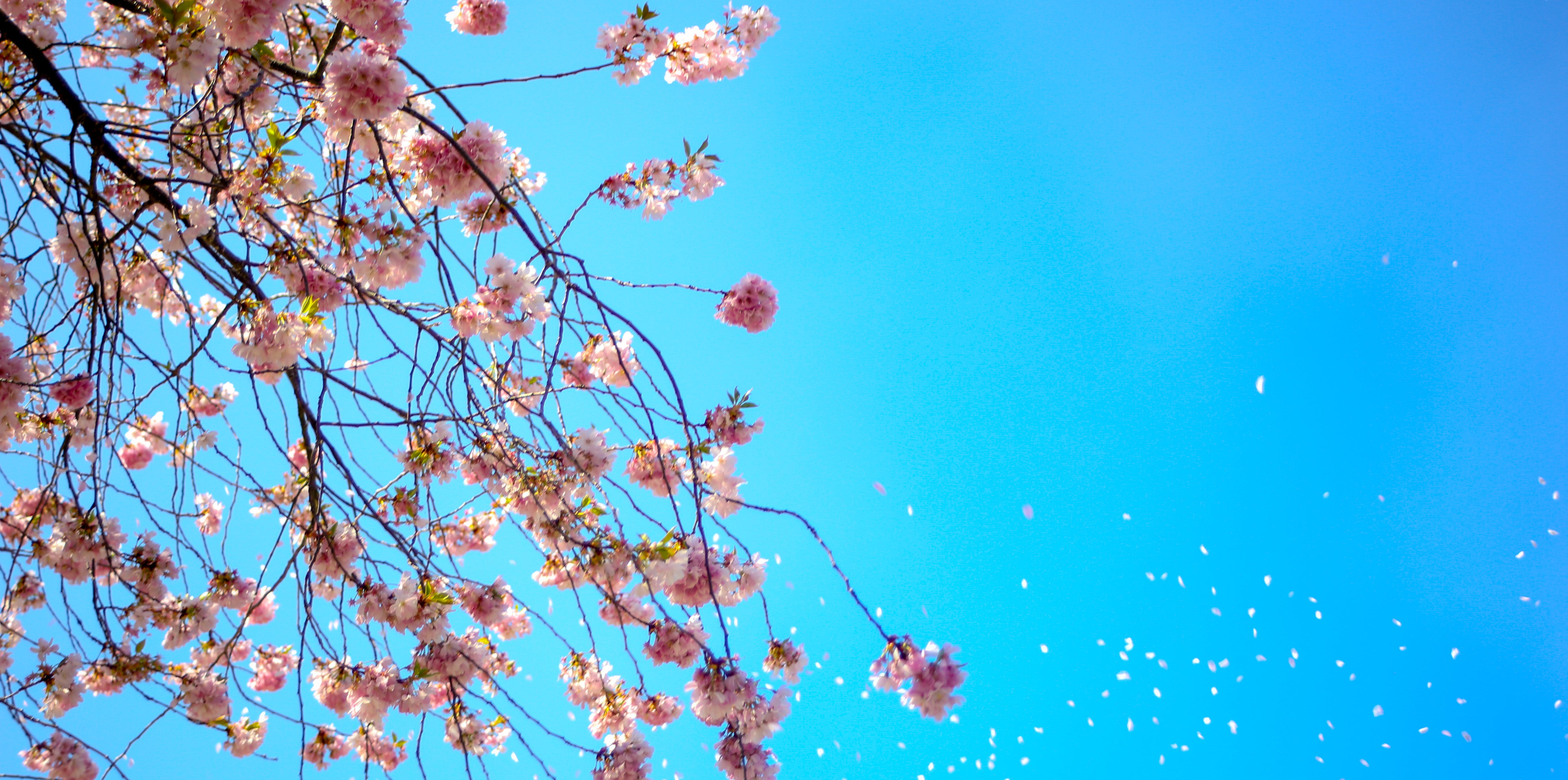 Photo of White and Red Petal Flower Under Blue Sky