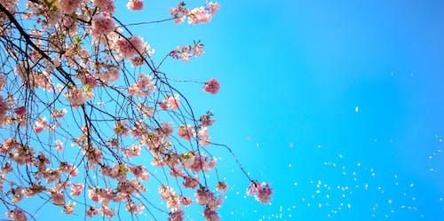 Foto Del Fiore Bianco E Rosso Del Petalo Sotto Il Cielo Blu