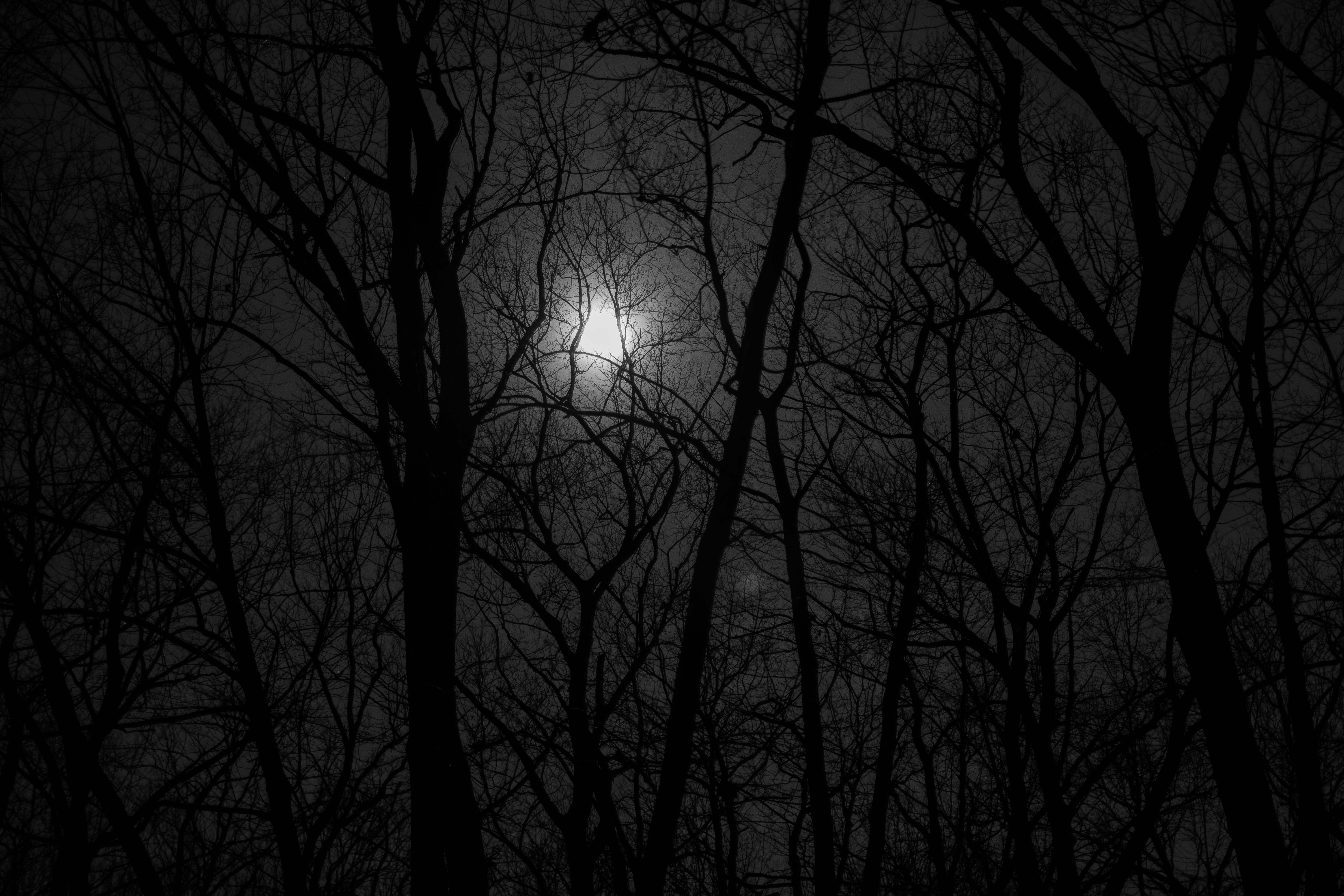 Free stock photo of night, forest, silhouette, moon