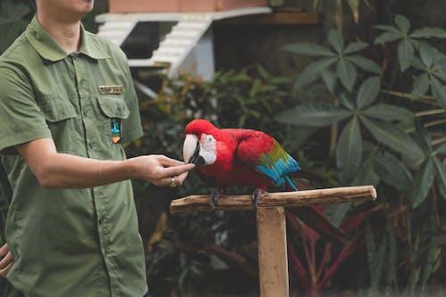 A Person Feeding a Scarlet Macaw