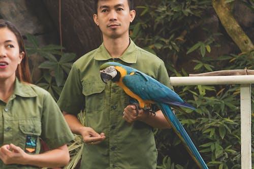 Free stock photo of animal, animal photography, bird